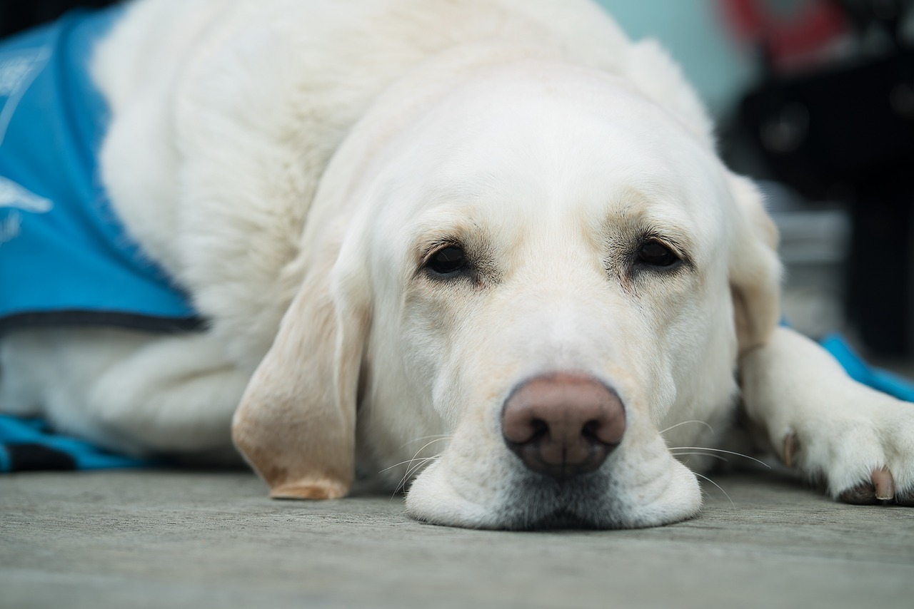 Guide Dogs Do's & Don'ts